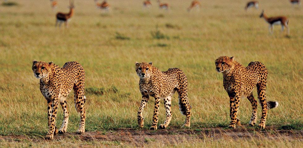 12 Days 11 Nights Tsavo West / Tsavo East / Taita Hills / Amboseli / Aberdare / Nakuru / Naivasha / Masai Mara Safari Package