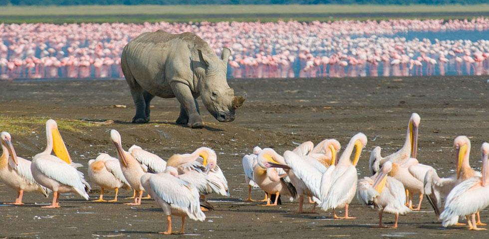 13 Days 12 Nights Masai Mara / Lake Nakuru / Amboseli / Lake Manyara / Serengeti / Ngorongoro crater Safari Package