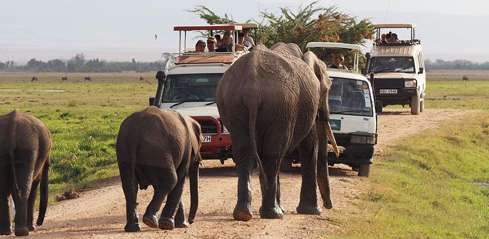 2 Days 1 Night Amboseli Safari Package