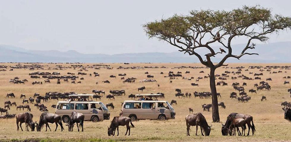 2 Days 1 Night Masai Mara Safari Package