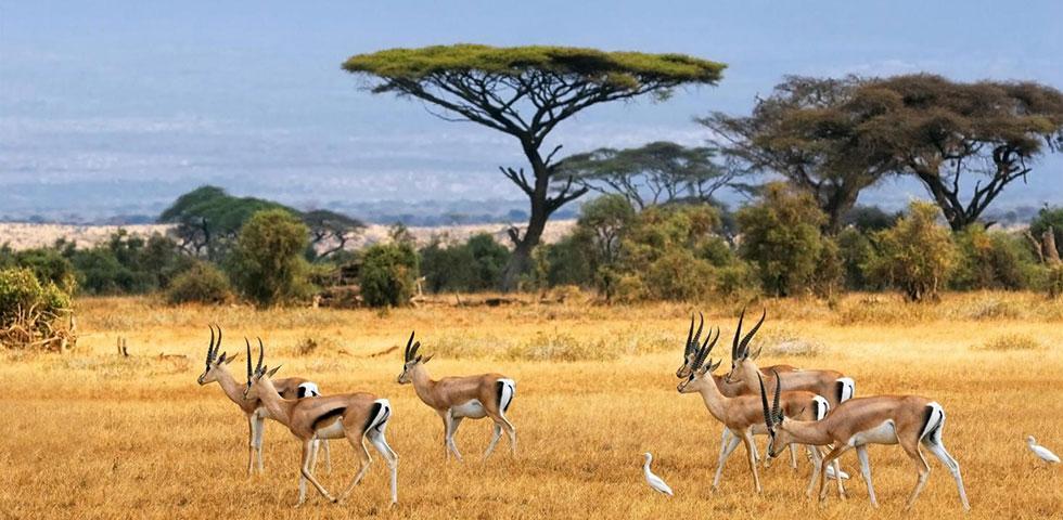 3 Days 2 Nights Amboseli Safari Package