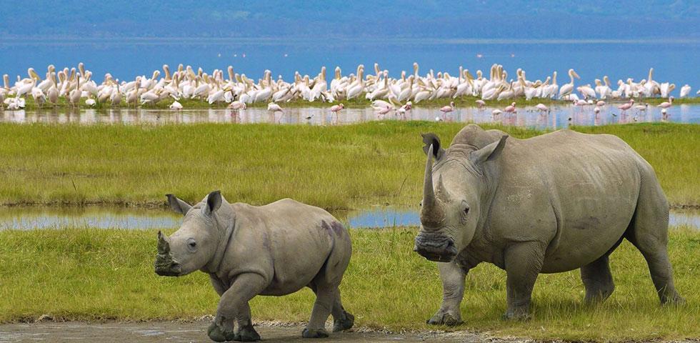 3 Days 2 Nights Lake Nakuru Safari Package