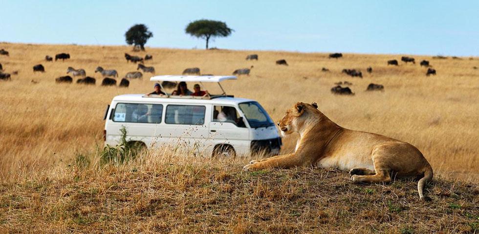 3 Days 2 Nights Masai Mara Safari Package