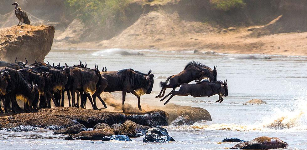 4 Days 3 Nights Masai Mara / Nairobi Migration Safari Package