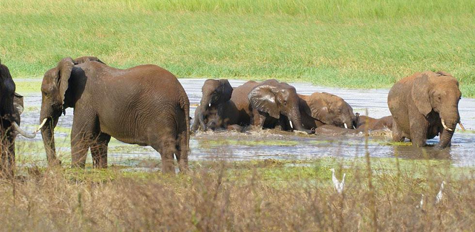 4 Days 3 Nights Tarangire / Ngorongoro & Lake Manyara Safari Package