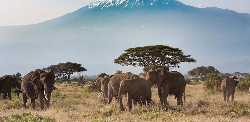 5 Days 4 Nights Amboseli / Lake Naivasha / Masai Mara / Nairobi Safari Package
