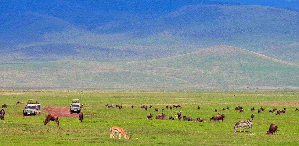 5 Days 4 Nights Lake Manyara / Ngorongoro Crater / Serengeti Safari Package