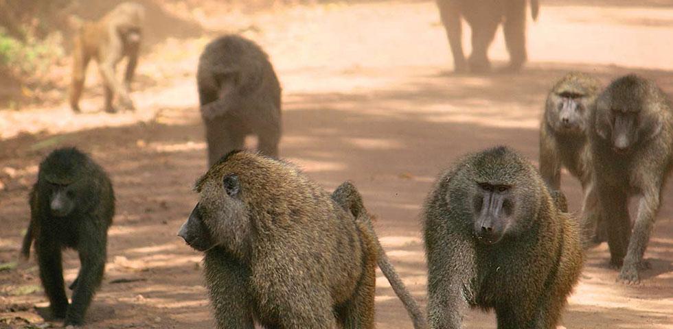 5 Days 4 Nights Lake Manyara / Ngorongoro crater / Tarangire Safari Pacakage