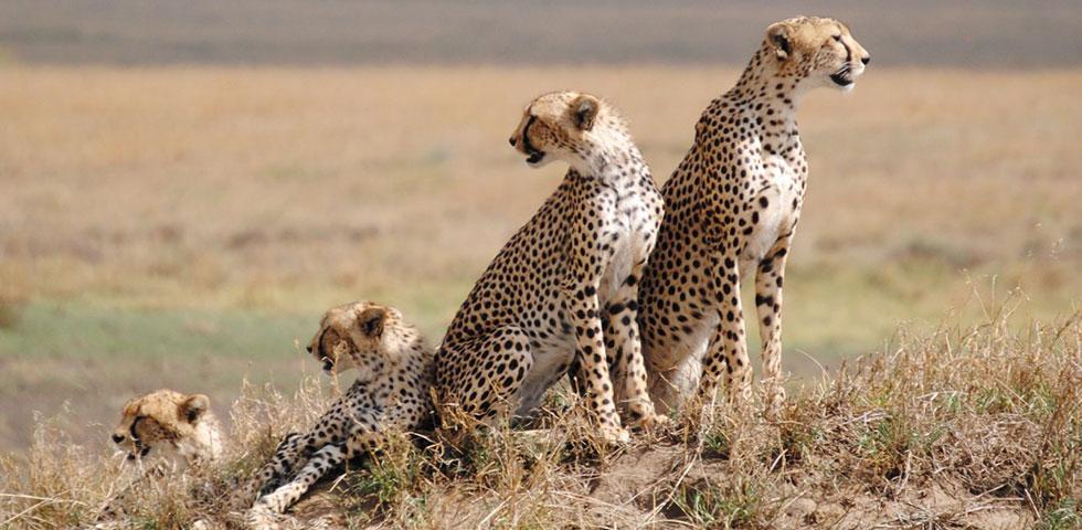 6 Days 5 Nights Lake Manyara / Ngorongoro Crater / Serengeti / Tarangire Safari Package