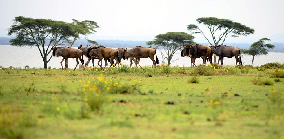 7 Days 6 Nights Aberdares / Lake Nakuru / Masai Mara / Lake Naivasha / Amboseli / Nairobi Safari Package