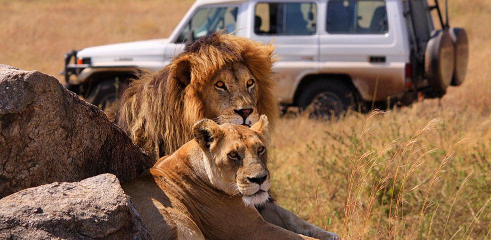 7 Days 6 Nights Lake Manyara / Serengeti / Ngorongoro Crater / Tarangire Safari Package
