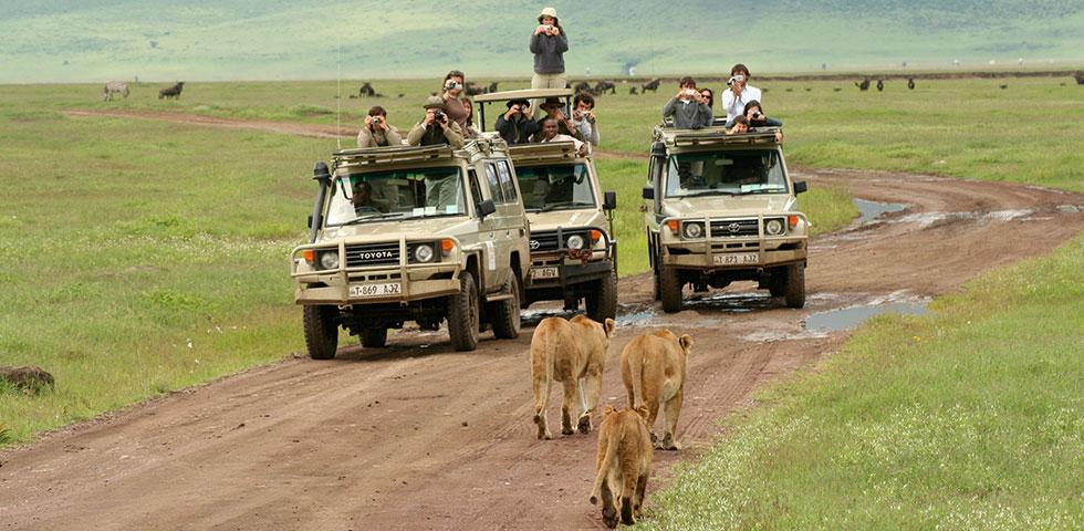 7 Days 6 Nights Lake Nakuru / Masai Mara / Isebania / Serengeti / Ngorongoro Crater Safari Package