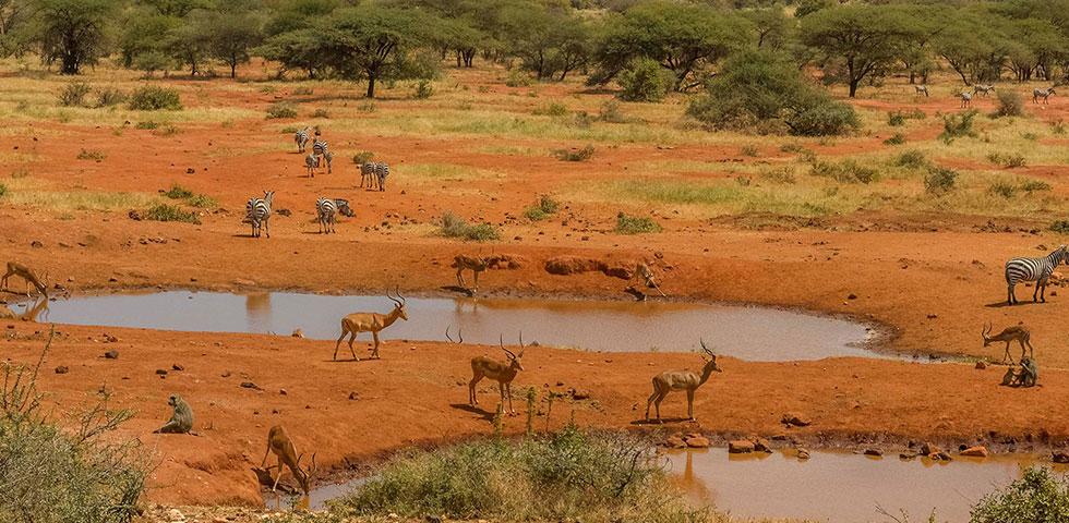 7 Days 6 Nights Tsavo West / Tsavo East / Amboseli / Lake Naivasha / Masai Mara Safari Package