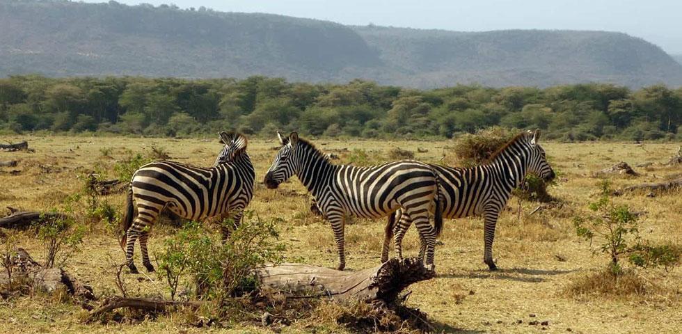 8 Days 7 Nights Masai Mara / Lake Nakuru / Lake Manyara / Serengeti / Ngorongoro Safari Package