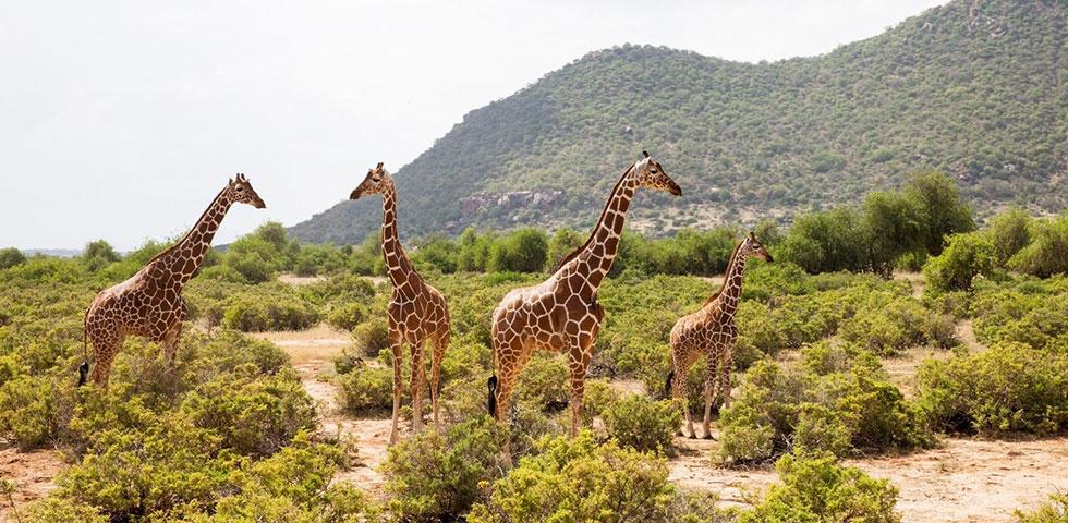 8 Days 7 Nights Masai Mara / Lake Nakuru / Serengeti / Ngorongoro Crater Safari Package
