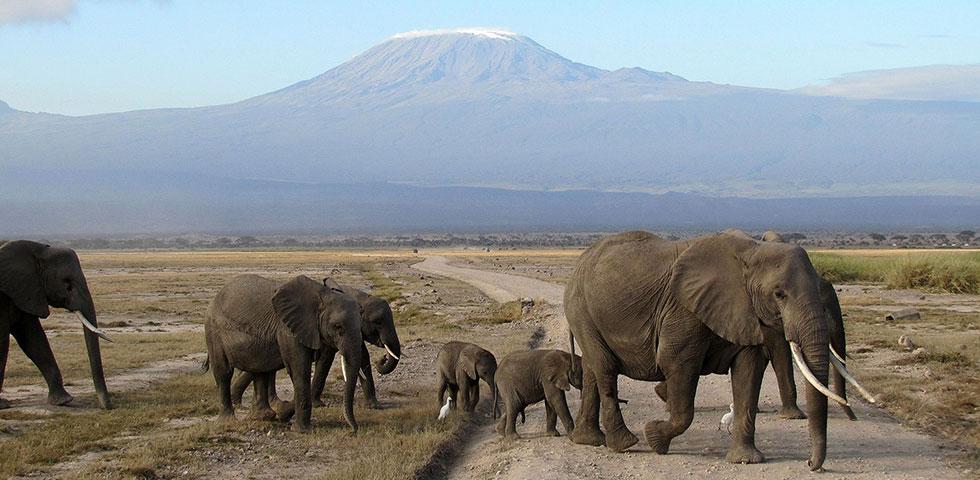 9 Days 8 Nights Amboseli / Serengeti / Lake Manyara / Ngorongoro Safari Package
