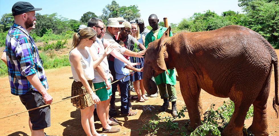 Daphne Sheldrick Elephant Orphanage Day Trip